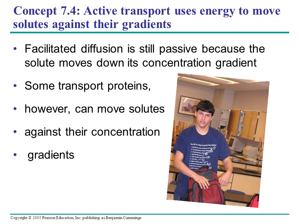 Concept 7.4: Active transport uses energy to move solutes against their gradients