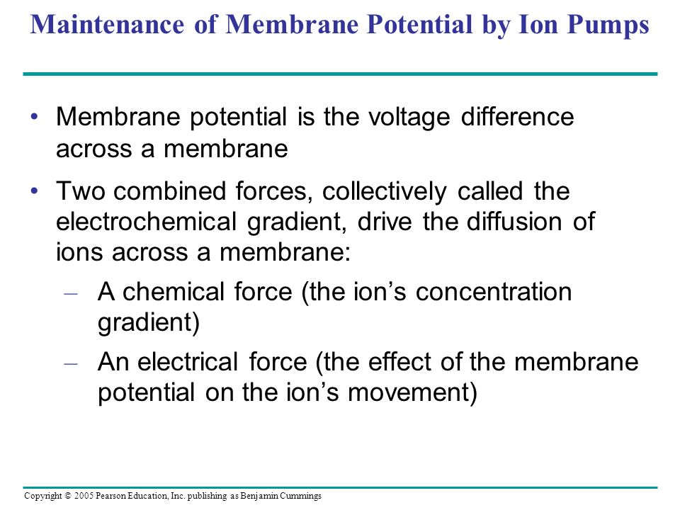 Maintenance of Membrane Potential by Ion Pumps