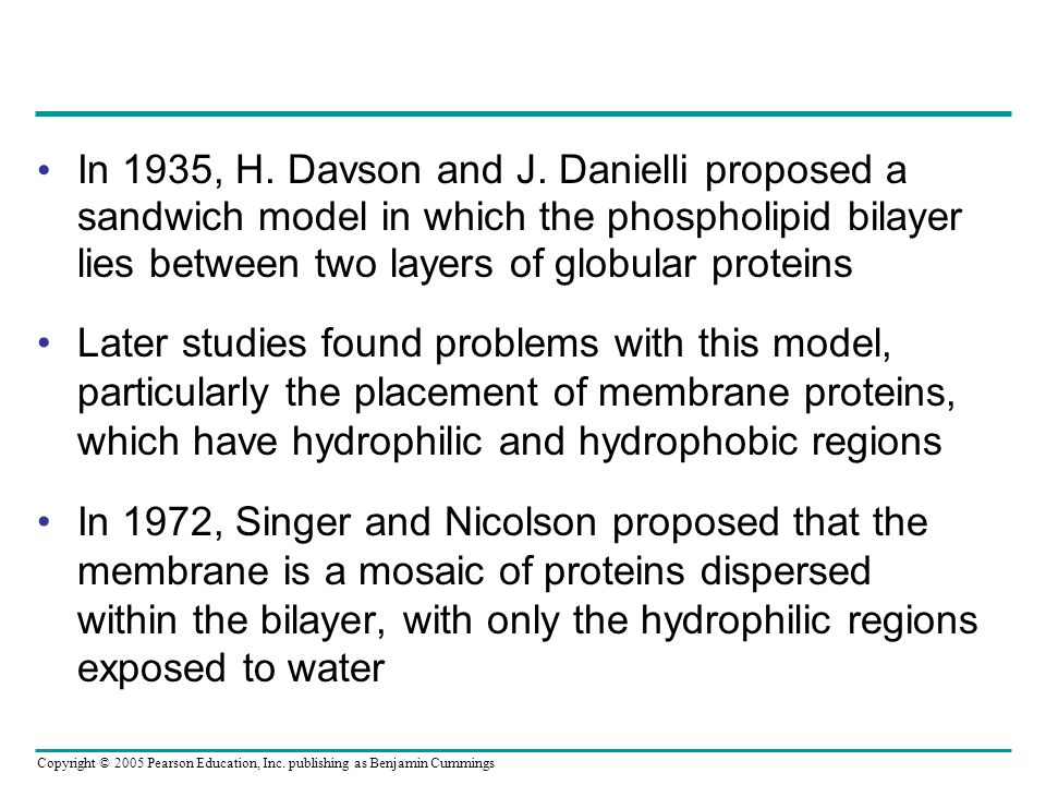 In 1935, H. Davson and J. Danielli proposed a sandwich model in which the phospholipid bilayer lies between two layers of globular proteins