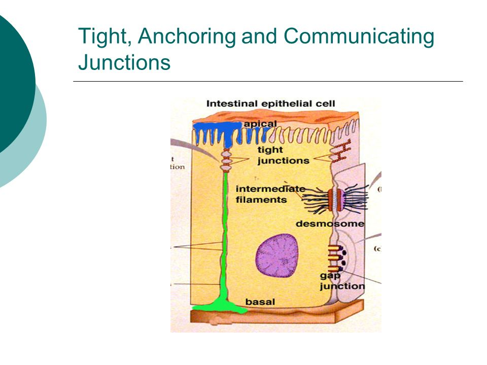 Tight, Anchoring and Communicating Junctions