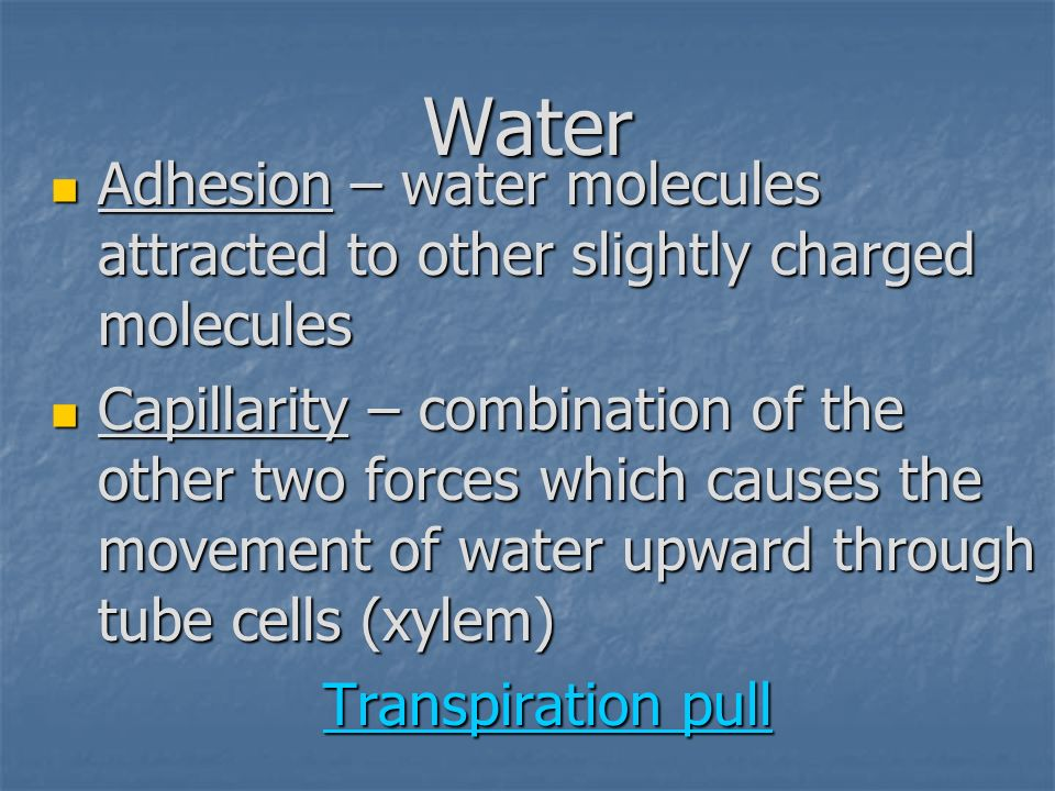 Water Adhesion – water molecules attracted to other slightly charged molecules.