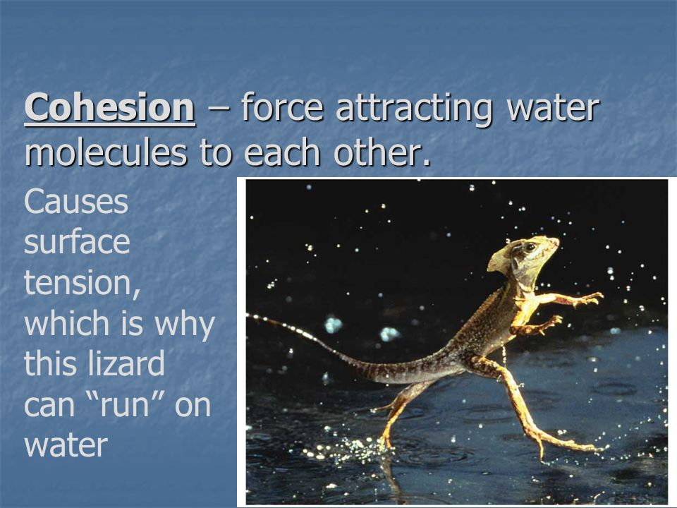 Cohesion – force attracting water molecules to each other.