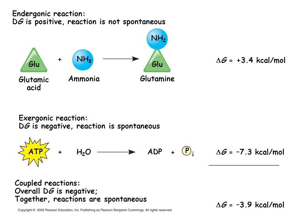 Glutamic acid Ammonia Glutamine ATP H2O ADP
