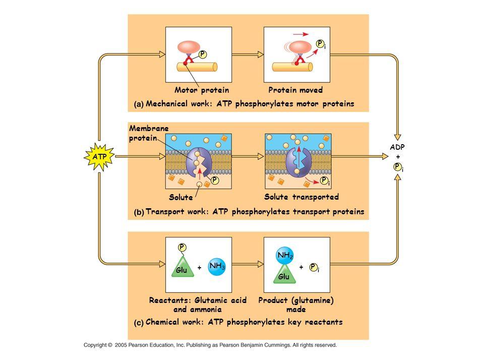 Reactants: Glutamic acid