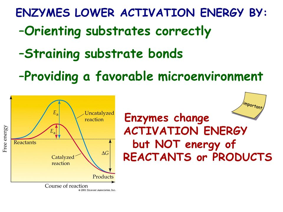 ENZYMES LOWER ACTIVATION ENERGY BY: