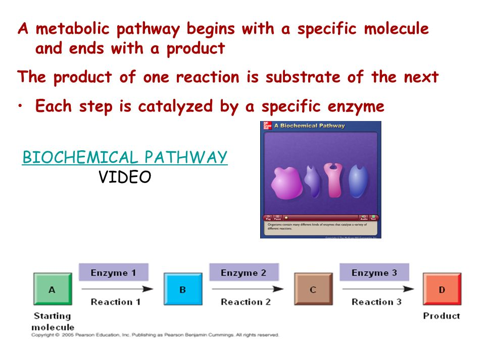 BIOCHEMICAL PATHWAY VIDEO