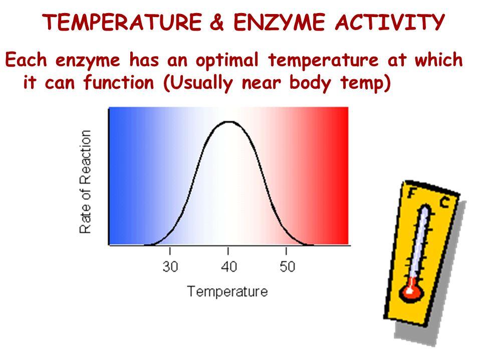 TEMPERATURE & ENZYME ACTIVITY