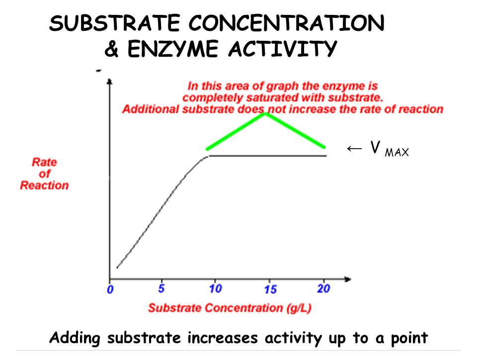 SUBSTRATE CONCENTRATION & ENZYME ACTIVITY