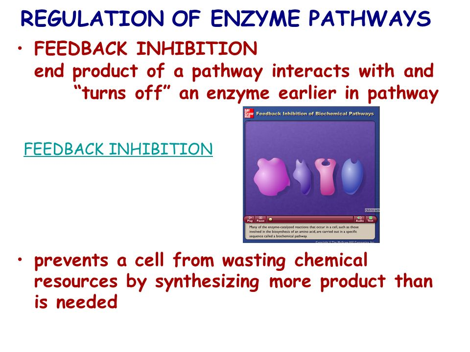 REGULATION OF ENZYME PATHWAYS