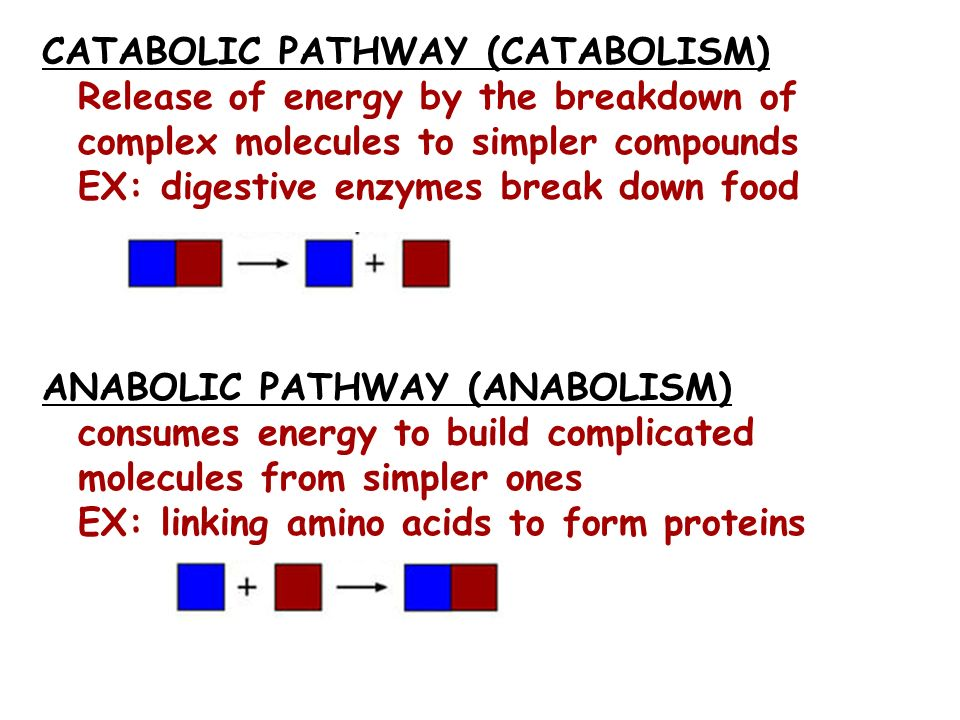 CATABOLIC PATHWAY (CATABOLISM) Release of energy by the breakdown of complex molecules to simpler compounds EX: digestive enzymes break down food ANABOLIC PATHWAY (ANABOLISM) consumes energy to build complicated molecules from simpler ones EX: linking amino acids to form proteins