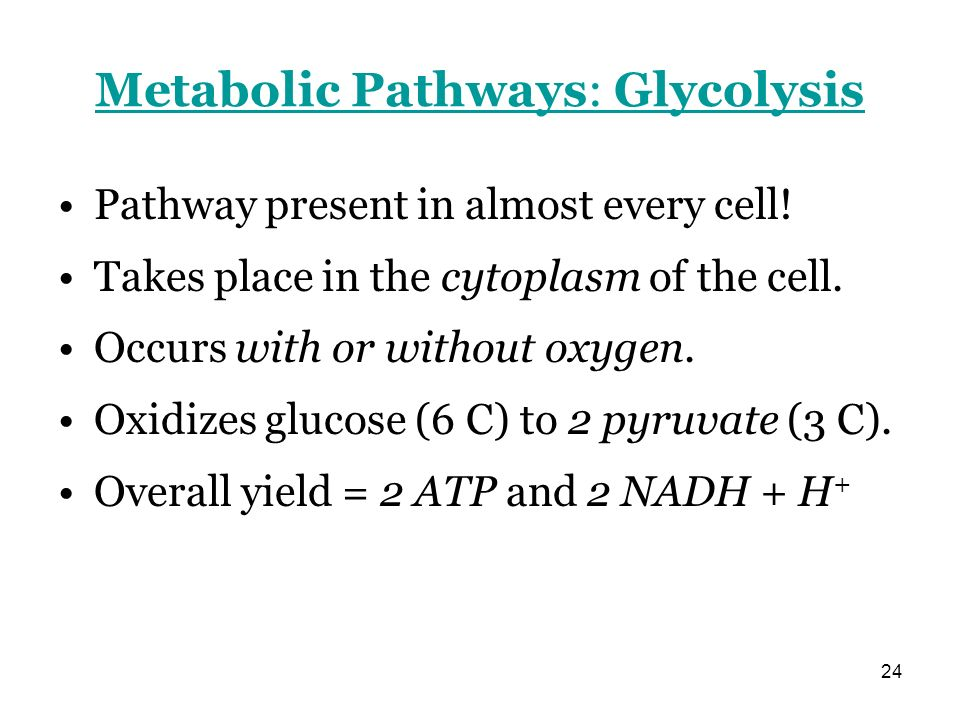 Metabolic Pathways: Glycolysis