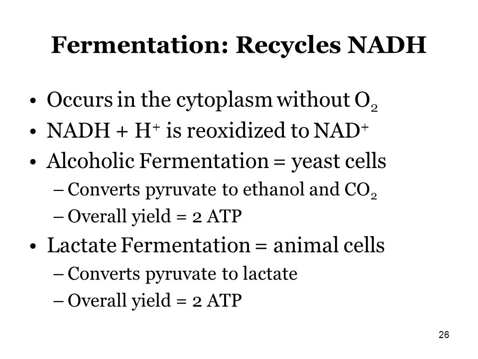Fermentation: Recycles NADH