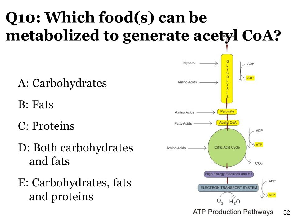 Q10: Which food(s) can be metabolized to generate acetyl CoA