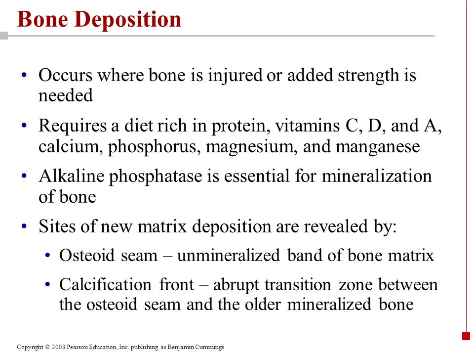 Bone Deposition Occurs where bone is injured or added strength is needed.