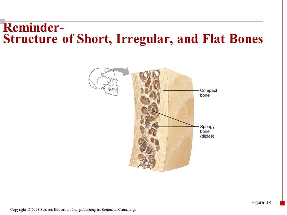 Reminder- Structure of Short, Irregular, and Flat Bones