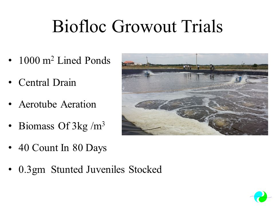 Biofloc Growout Trials
