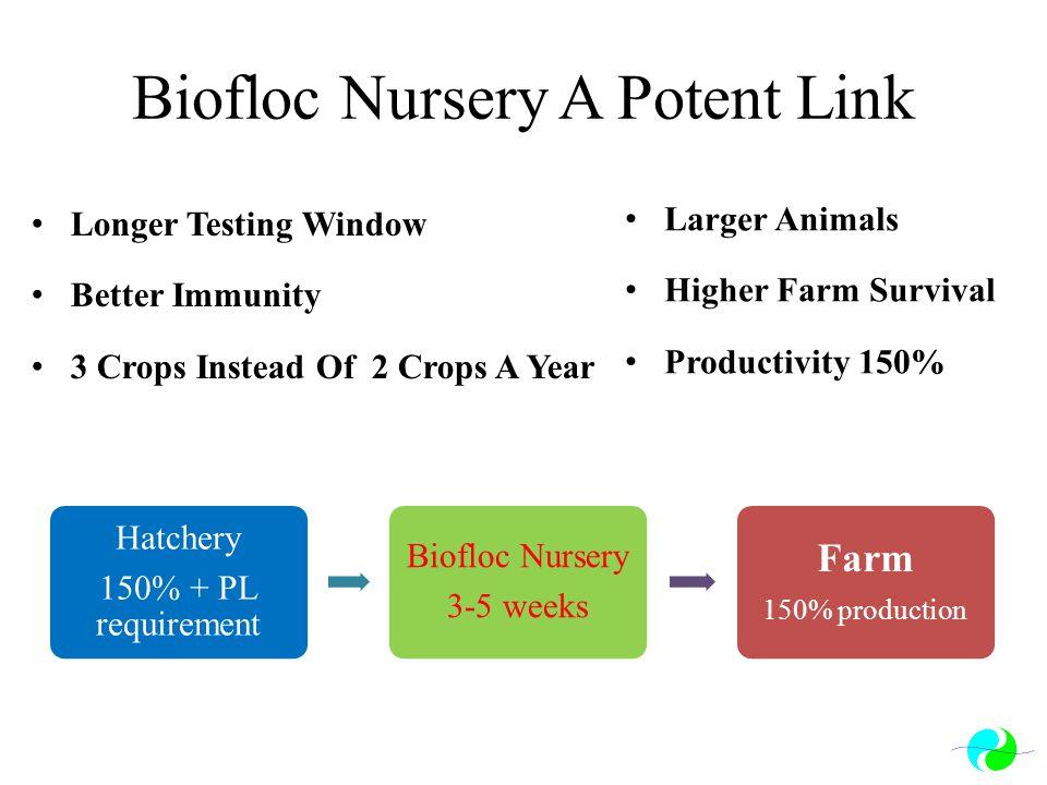 Biofloc Nursery A Potent Link