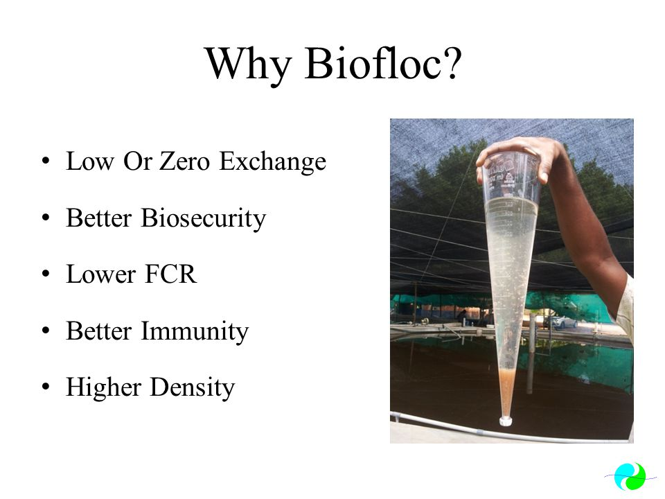 Why Biofloc Low Or Zero Exchange Better Biosecurity Lower FCR