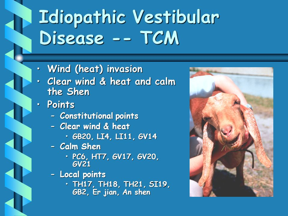 Idiopathic Vestibular Disease -- TCM
