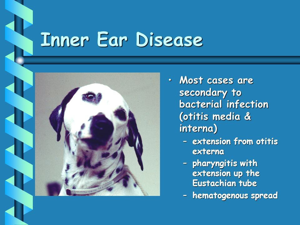 Inner Ear Disease Most cases are secondary to bacterial infection (otitis media & interna) extension from otitis externa.