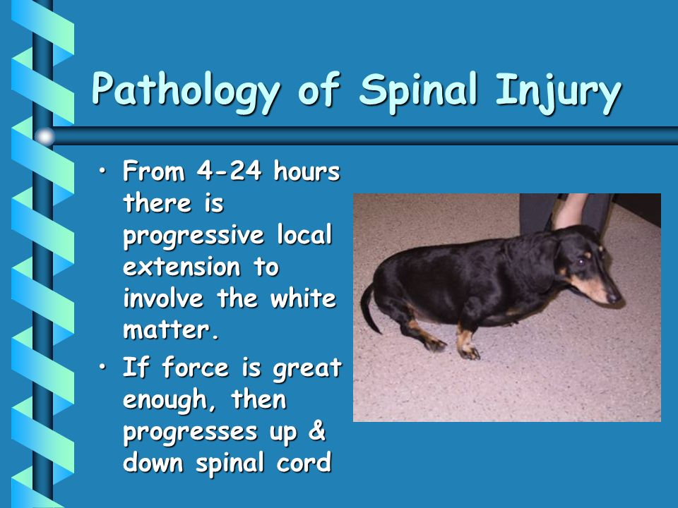 Pathology of Spinal Injury