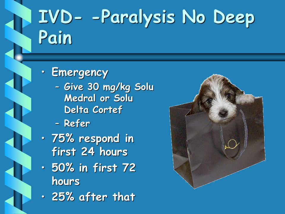 IVD- -Paralysis No Deep Pain