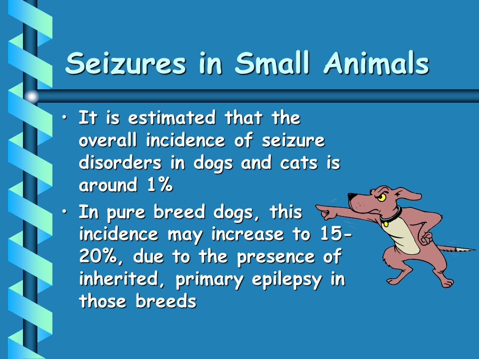 Seizures in Small Animals