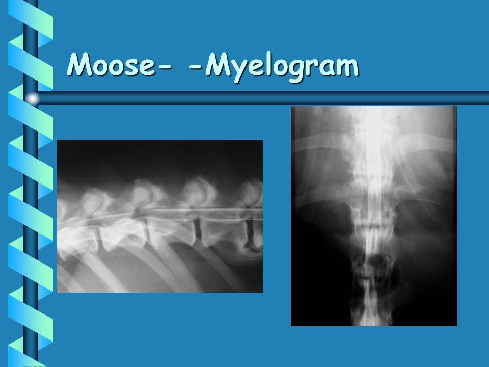 Moose- -Myelogram