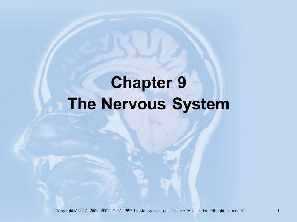 Chapter 9 The Nervous System