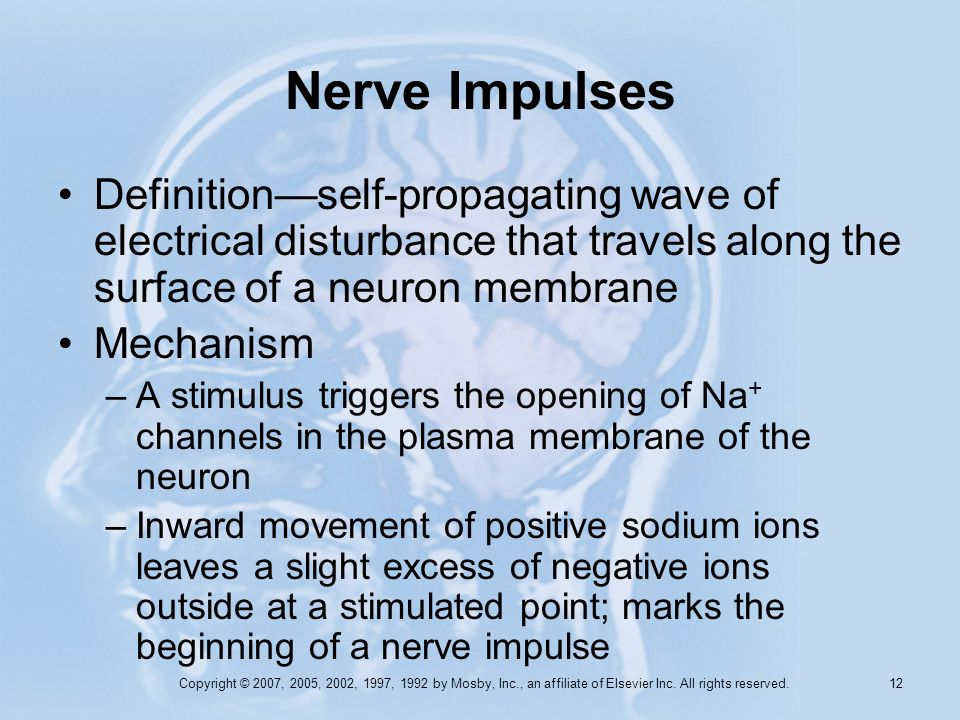 Nerve Impulses Definition—self-propagating wave of electrical disturbance that travels along the surface of a neuron membrane.