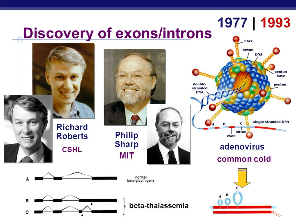 Discovery of exons/introns