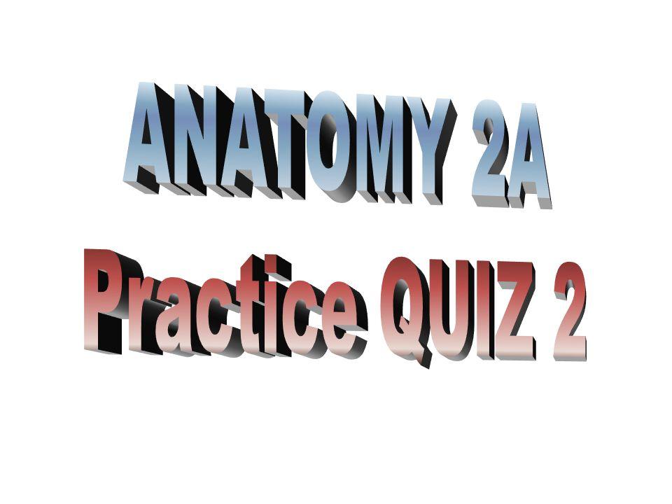 ANATOMY 2A Practice QUIZ 2
