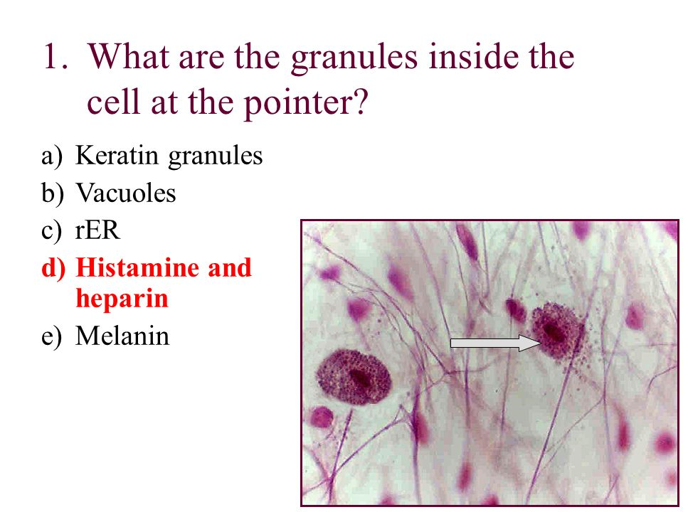 What are the granules inside the cell at the pointer