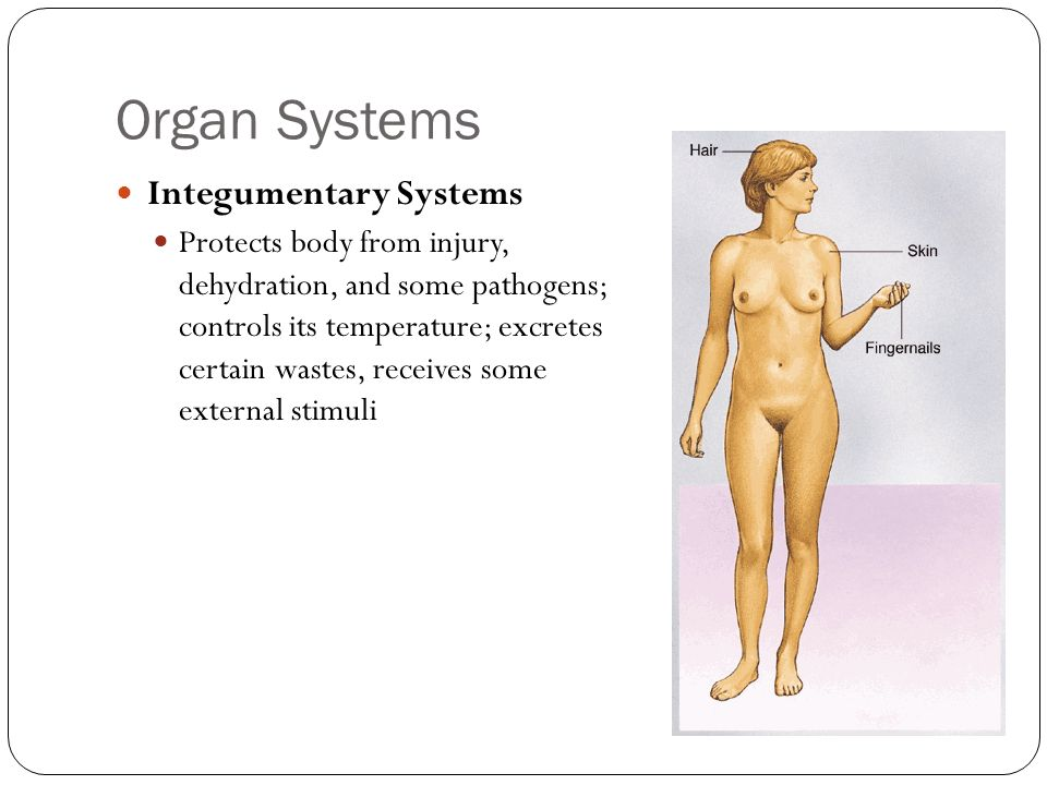 Organ Systems Integumentary Systems