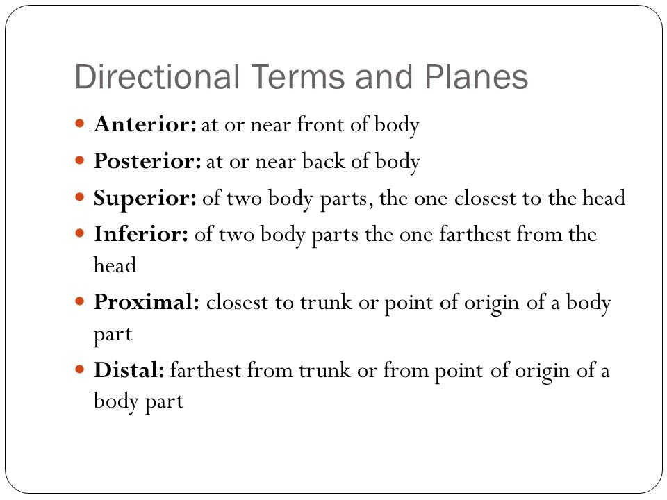 Directional Terms and Planes