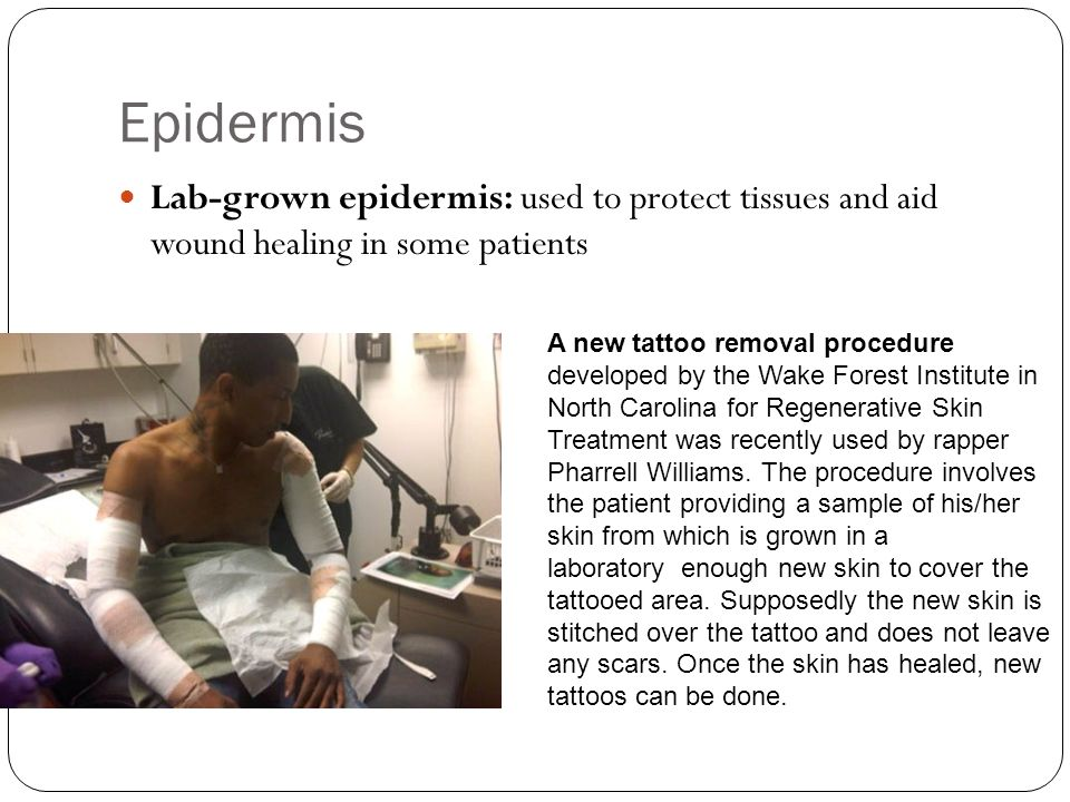 Epidermis Lab-grown epidermis: used to protect tissues and aid wound healing in some patients.