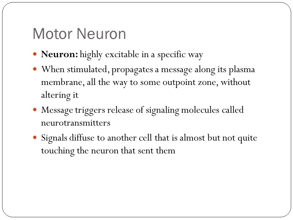 Motor Neuron Neuron: highly excitable in a specific way