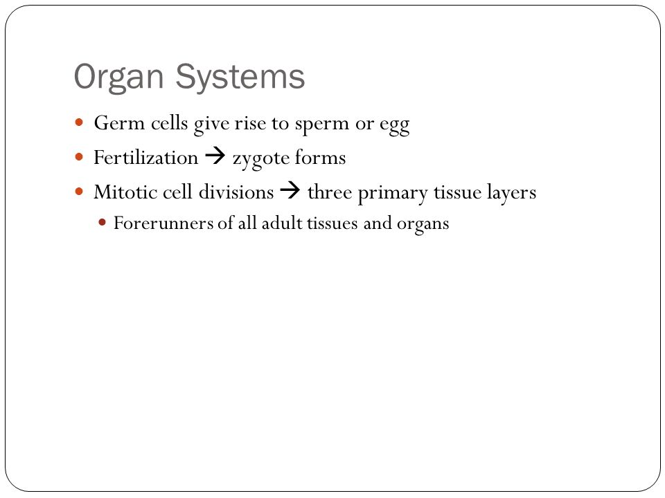 Organ Systems Germ cells give rise to sperm or egg