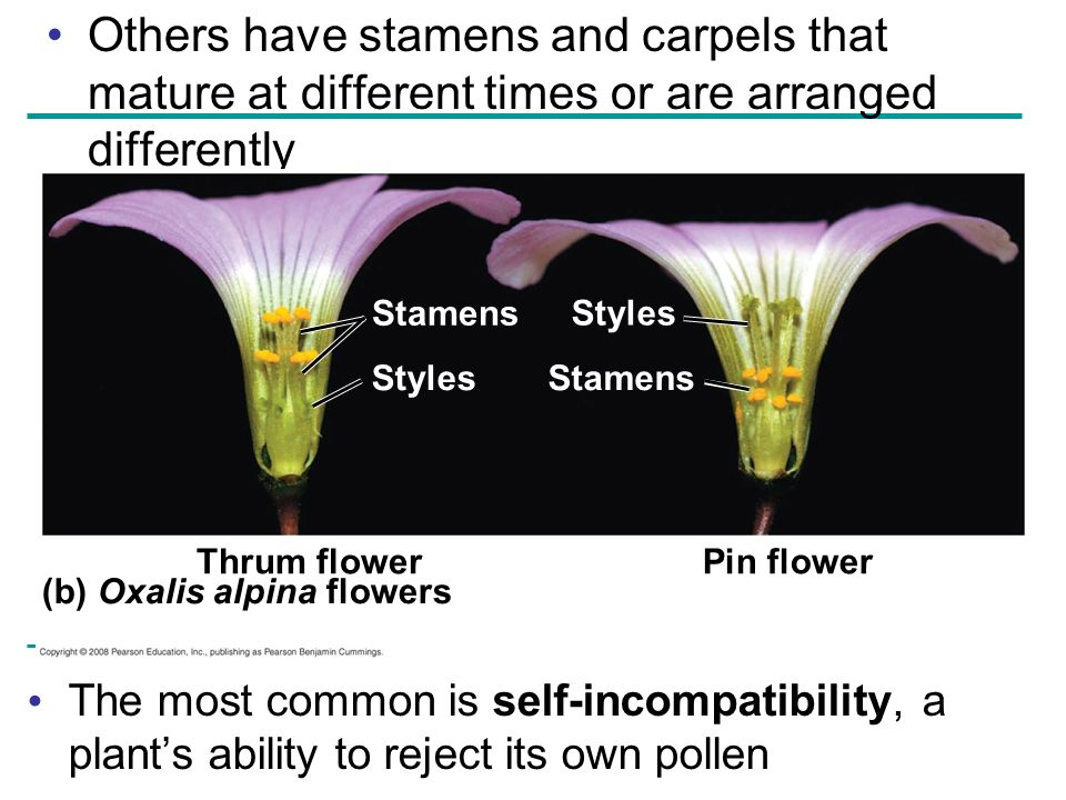 Others have stamens and carpels that mature at different times or are arranged differently