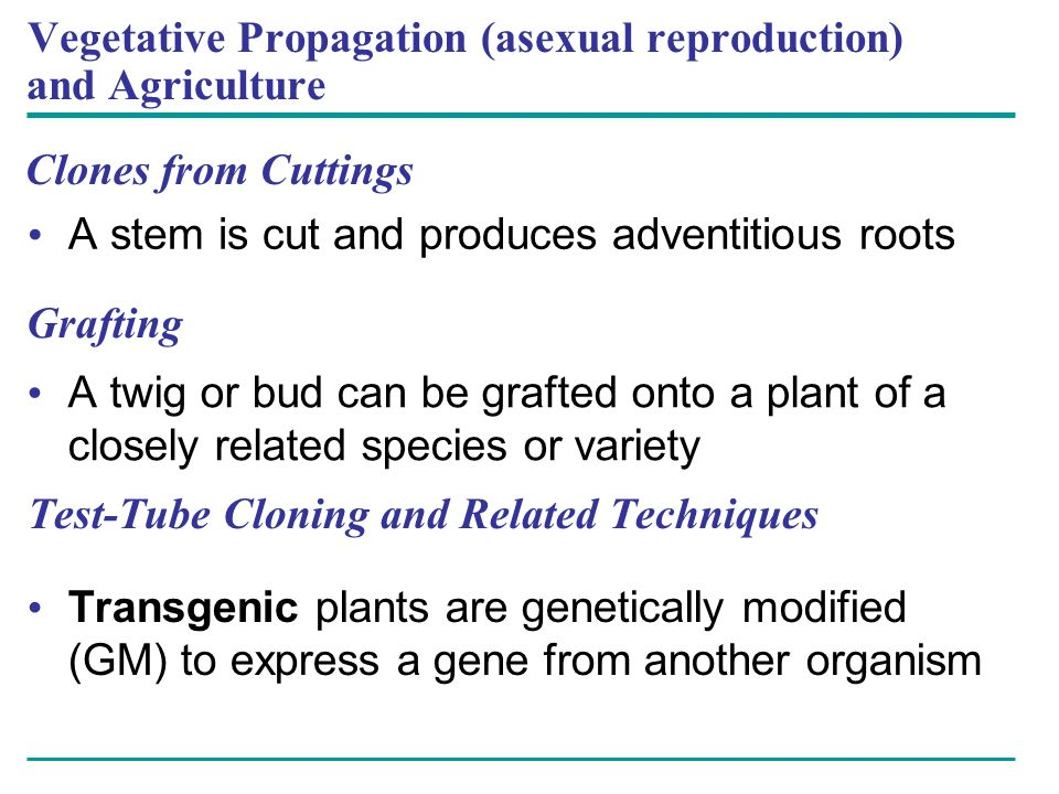 Vegetative Propagation (asexual reproduction) and Agriculture
