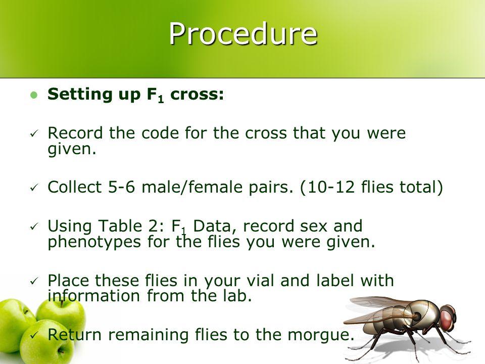 Procedure Setting up F1 cross: