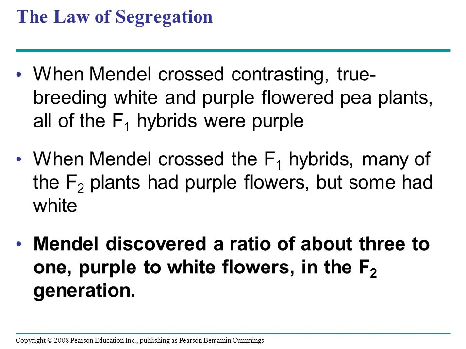 The Law of Segregation When Mendel crossed contrasting, true-breeding white and purple flowered pea plants, all of the F1 hybrids were purple.