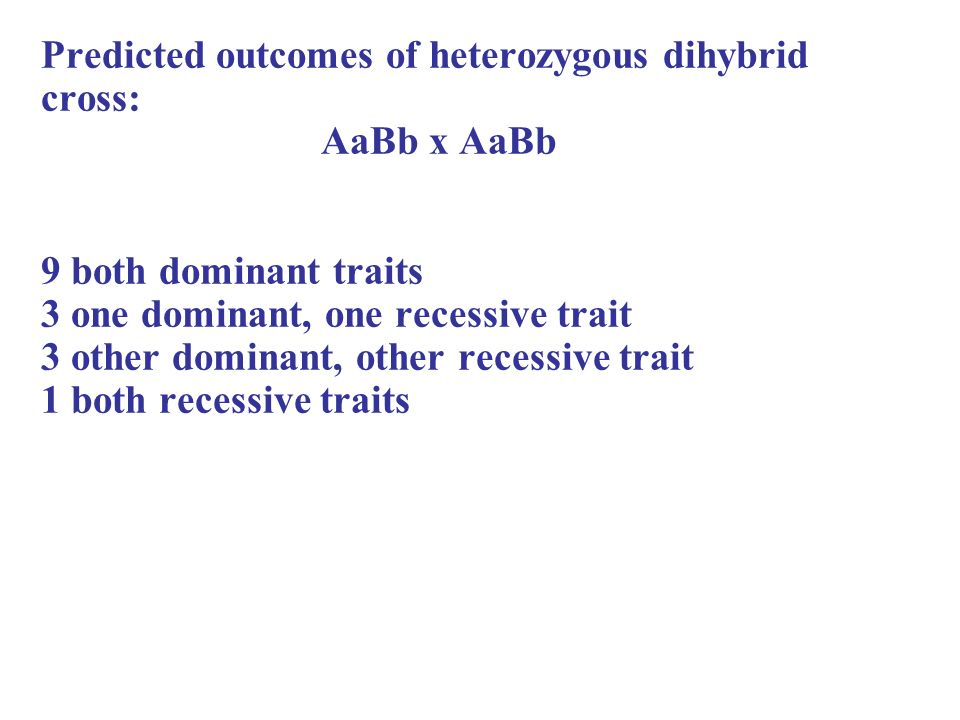 Predicted outcomes of heterozygous dihybrid cross: AaBb x AaBb 9 both dominant traits 3 one dominant, one recessive trait 3 other dominant, other recessive trait 1 both recessive traits