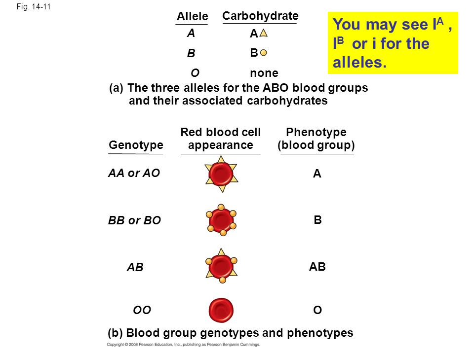 You may see IA , IB or i for the alleles.