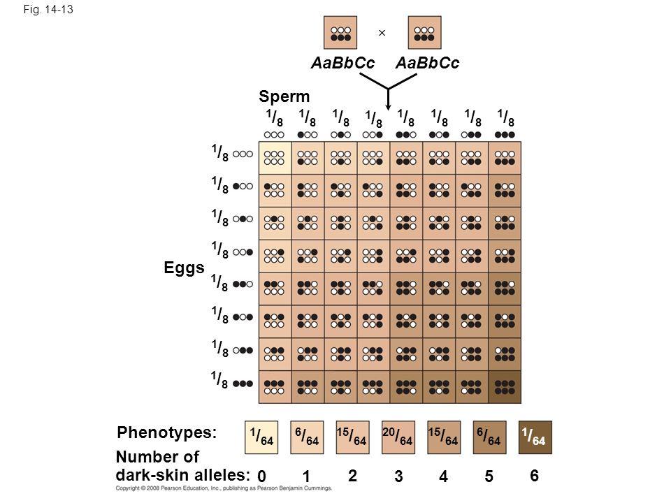 Fig. 14-13 AaBbCc. AaBbCc. Sperm. 1/8. 1/8. 1/8. 1/8. 1/8. 1/8. 1/8. 1/8. 1/8. 1/8. 1/8.