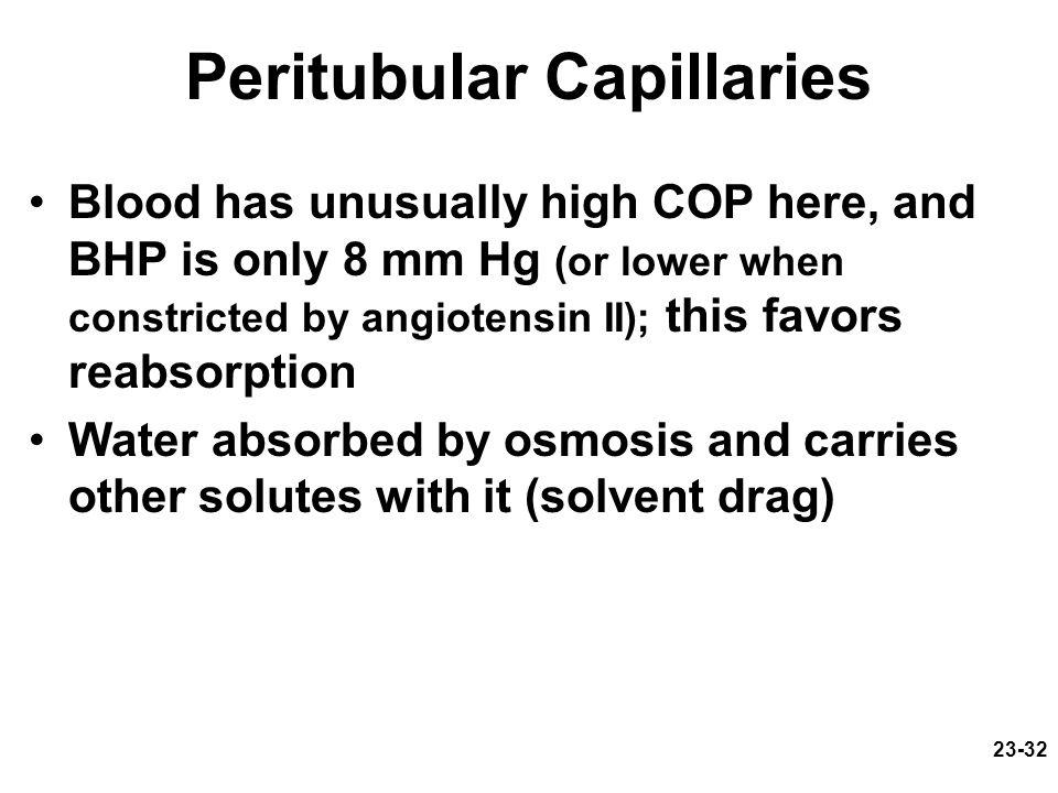 Peritubular Capillaries