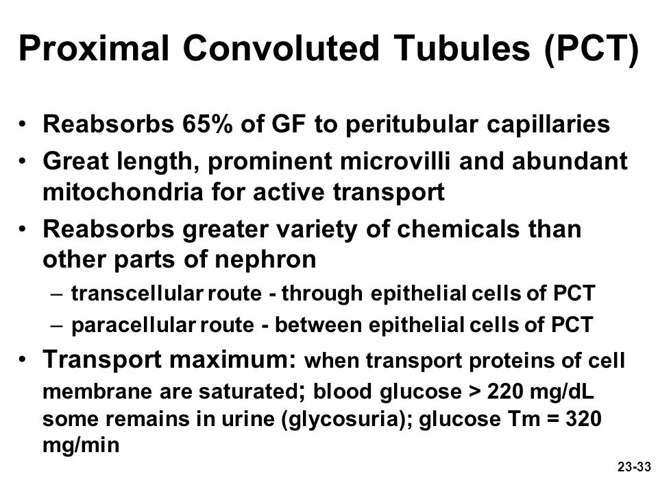 Proximal Convoluted Tubules (PCT)
