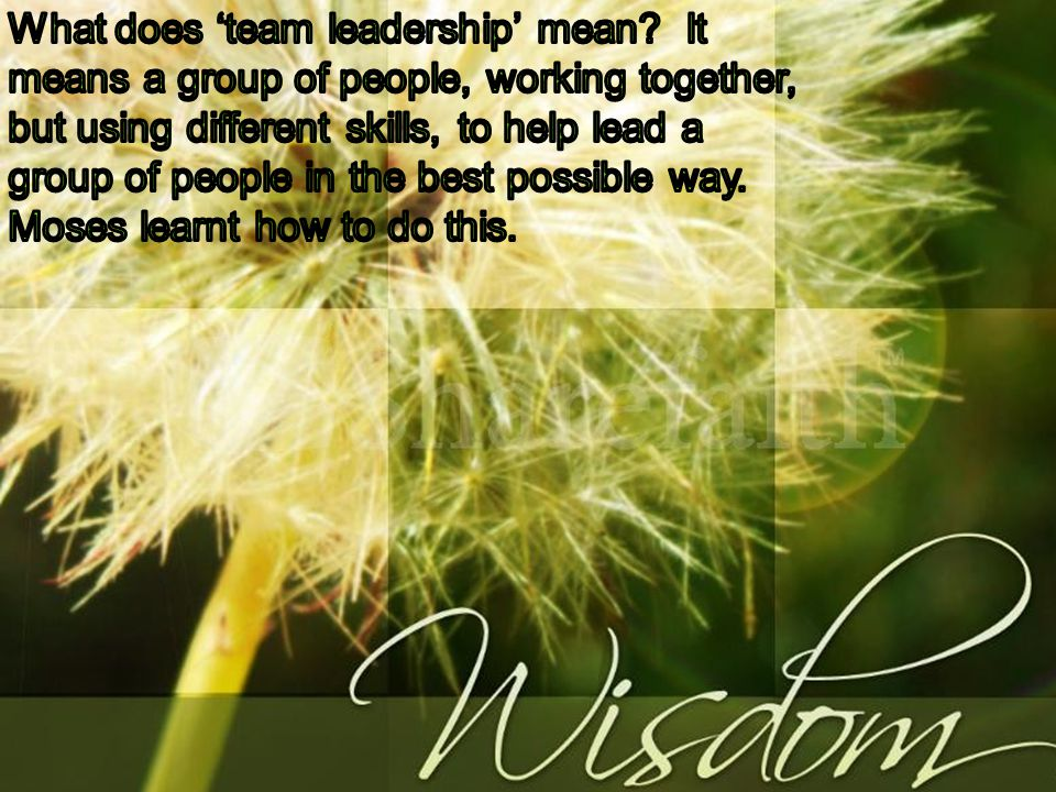 What does 'team leadership' mean
