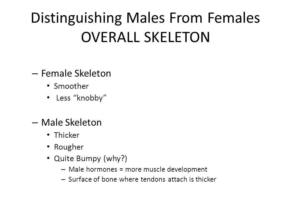Distinguishing Males From Females OVERALL SKELETON