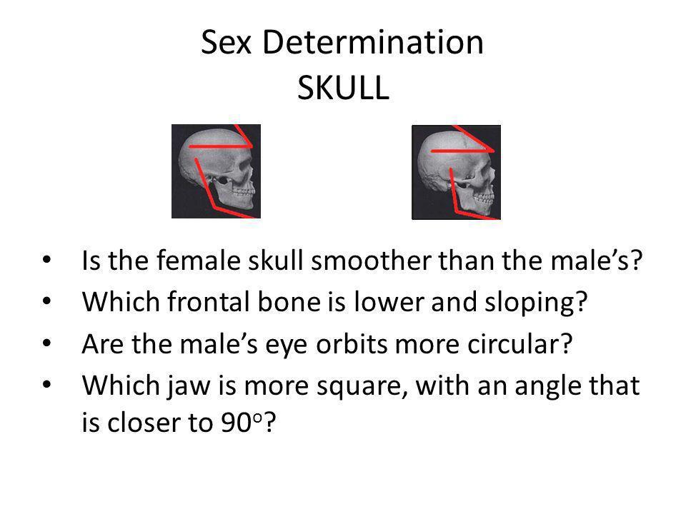 Sex Determination SKULL